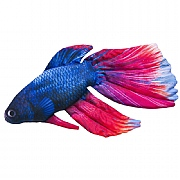 Siamese Fighting Fish Cushion