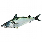 Mackerel Cushion, 24in.