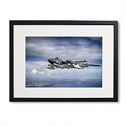 Enthusiast's Pack Sea Vixen 'Foxy Lady'